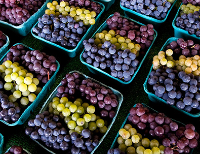 Bunches of grapes, grown locally in New York, are shown in bushels ready for commercial buyers.